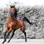 حصان 2019 أنواع الحصان ومعلومات كاملة صور ميكس 29