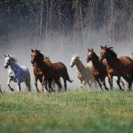 حصان 2019 أنواع الحصان ومعلومات كاملة صور ميكس 30