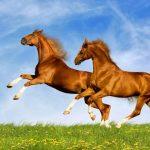 حصان 2019 أنواع الحصان ومعلومات كاملة صور ميكس 31