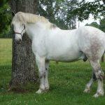 حصان 2019 أنواع الحصان ومعلومات كاملة صور ميكس 35