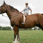 حصان 2019 أنواع الحصان ومعلومات كاملة صور ميكس 36