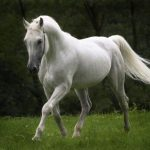 حصان 2019 أنواع الحصان ومعلومات كاملة صور ميكس 37