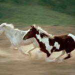 حصان 2019 أنواع الحصان ومعلومات كاملة صور ميكس 38