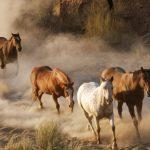حصان 2019 أنواع الحصان ومعلومات كاملة صور ميكس 39