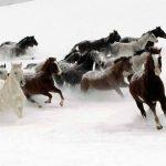 حصان 2019 أنواع الحصان ومعلومات كاملة صور ميكس 42