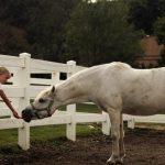 حصان 2019 أنواع الحصان ومعلومات كاملة صور ميكس 44