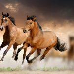 حصان 2019 أنواع الحصان ومعلومات كاملة صور ميكس 6