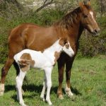 حصان 2019 أنواع الحصان ومعلومات كاملة صور ميكس 7