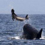 -حوت-ومعلومات-كاملة-عن-حياة-الحوت-صور-ميكس-10-150x150 صور حوت ومعلومات كاملة عن حياة الحوت