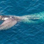 -حوت-ومعلومات-كاملة-عن-حياة-الحوت-صور-ميكس-14-150x150 صور حوت ومعلومات كاملة عن حياة الحوت