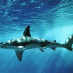 -حوت-ومعلومات-كاملة-عن-حياة-الحوت-صور-ميكس-16-150x150 صور حوت ومعلومات كاملة عن حياة الحوت