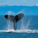 -حوت-ومعلومات-كاملة-عن-حياة-الحوت-صور-ميكس-17-150x150 صور حوت ومعلومات كاملة عن حياة الحوت
