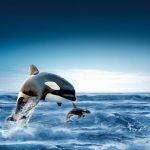 -حوت-ومعلومات-كاملة-عن-حياة-الحوت-صور-ميكس-20-150x150 صور حوت ومعلومات كاملة عن حياة الحوت