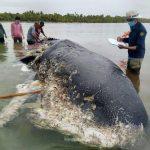 -حوت-ومعلومات-كاملة-عن-حياة-الحوت-صور-ميكس-22-150x150 صور حوت ومعلومات كاملة عن حياة الحوت