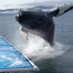 -حوت-ومعلومات-كاملة-عن-حياة-الحوت-صور-ميكس-27-150x150 صور حوت ومعلومات كاملة عن حياة الحوت