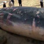 -حوت-ومعلومات-كاملة-عن-حياة-الحوت-صور-ميكس-30-150x150 صور حوت ومعلومات كاملة عن حياة الحوت