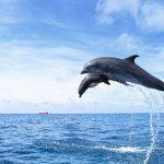 -حوت-ومعلومات-كاملة-عن-حياة-الحوت-صور-ميكس-37-150x150 صور حوت ومعلومات كاملة عن حياة الحوت
