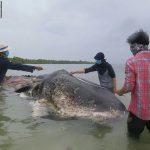 -حوت-ومعلومات-كاملة-عن-حياة-الحوت-صور-ميكس-41-150x150 صور حوت ومعلومات كاملة عن حياة الحوت