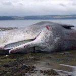 -حوت-ومعلومات-كاملة-عن-حياة-الحوت-صور-ميكس-43-150x150 صور حوت ومعلومات كاملة عن حياة الحوت
