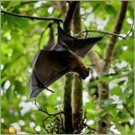خفاش تعرف على حياة الخفاش وأنوعها صور ميكس 43