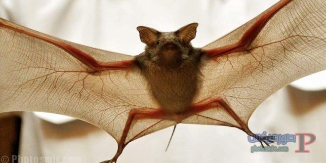 خفاش تعرف على حياة الخفاش وأنوعها صور ميكس 6