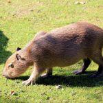 خنزير تعرف على أنواع الخنازير وحياتها صور ميكس 19