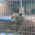 دب 2019 معلومات كاملة عن الدب صور ميكس 14
