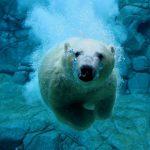 دب 2019 معلومات كاملة عن الدب صور ميكس 17