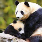 دب 2019 معلومات كاملة عن الدب صور ميكس 3