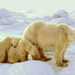 دب 2019 معلومات كاملة عن الدب صور ميكس 30