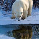 دب 2019 معلومات كاملة عن الدب صور ميكس 35