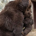 دب 2019 معلومات كاملة عن الدب صور ميكس 37