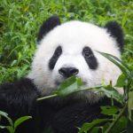 دب 2019 معلومات كاملة عن الدب صور ميكس 4