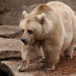 دب 2019 معلومات كاملة عن الدب صور ميكس 41
