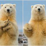 دب 2019 معلومات كاملة عن الدب صور ميكس 8