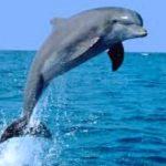 دلفين تعرف على حياة وأنواع الدلفين صور ميكس 1