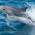 دلفين تعرف على حياة وأنواع الدلفين صور ميكس 12