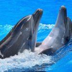 دلفين تعرف على حياة وأنواع الدلفين صور ميكس 13