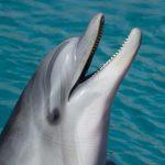 دلفين تعرف على حياة وأنواع الدلفين صور ميكس 18