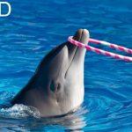 دلفين تعرف على حياة وأنواع الدلفين صور ميكس 2