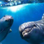 -دلفين-تعرف-على-حياة-وأنواع-الدلفين-صور-ميكس-23-150x150 صور دلفين تعرف على حياة وأنواع الدلفين