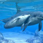 دلفين تعرف على حياة وأنواع الدلفين صور ميكس 24