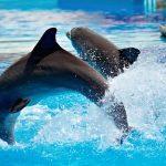 دلفين تعرف على حياة وأنواع الدلفين صور ميكس 25