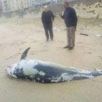 -دلفين-تعرف-على-حياة-وأنواع-الدلفين-صور-ميكس-28-150x150 صور دلفين تعرف على حياة وأنواع الدلفين