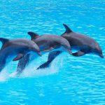 دلفين تعرف على حياة وأنواع الدلفين صور ميكس 3