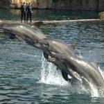 -دلفين-تعرف-على-حياة-وأنواع-الدلفين-صور-ميكس-31-150x150 صور دلفين تعرف على حياة وأنواع الدلفين