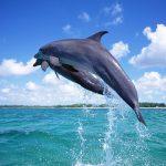 دلفين تعرف على حياة وأنواع الدلفين صور ميكس 32
