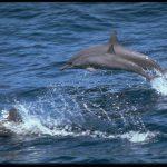 -دلفين-تعرف-على-حياة-وأنواع-الدلفين-صور-ميكس-36-150x150 صور دلفين تعرف على حياة وأنواع الدلفين
