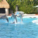 -دلفين-تعرف-على-حياة-وأنواع-الدلفين-صور-ميكس-42-150x150 صور دلفين تعرف على حياة وأنواع الدلفين
