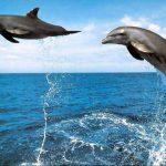 دلفين تعرف على حياة وأنواع الدلفين صور ميكس 44